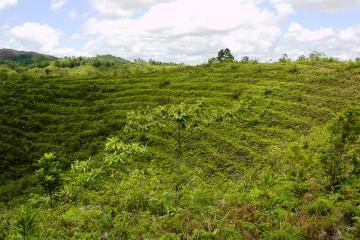 Reforestation site in Bandiangan, Ajuy, Iloilo.